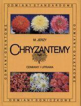 Chryzantemy. Odmiany i uprawa