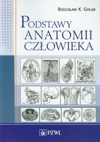 Podstawy anatomii człowieka
